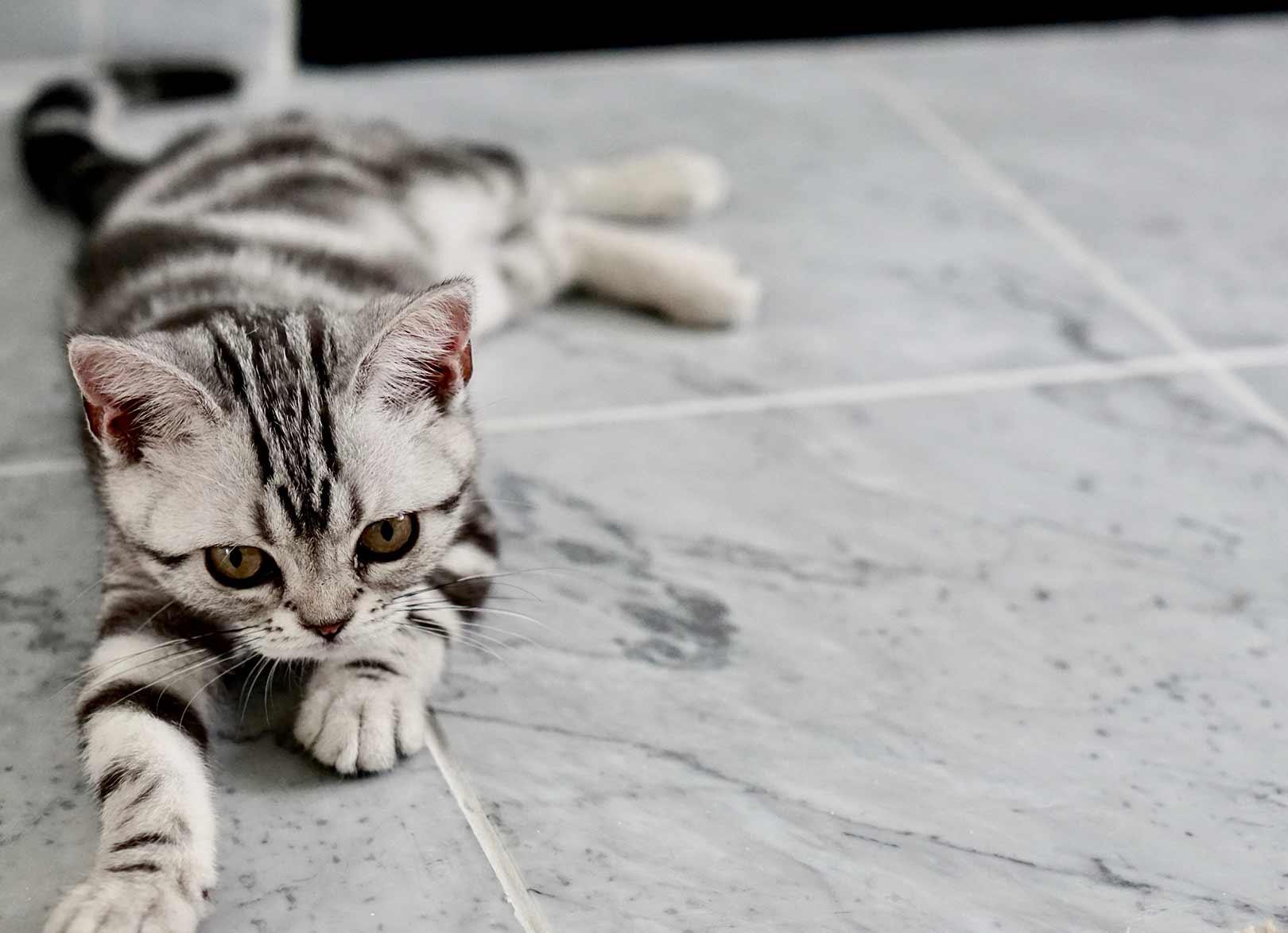 Grey tabby kitten relaxing on warm floor with underfloor heating mat