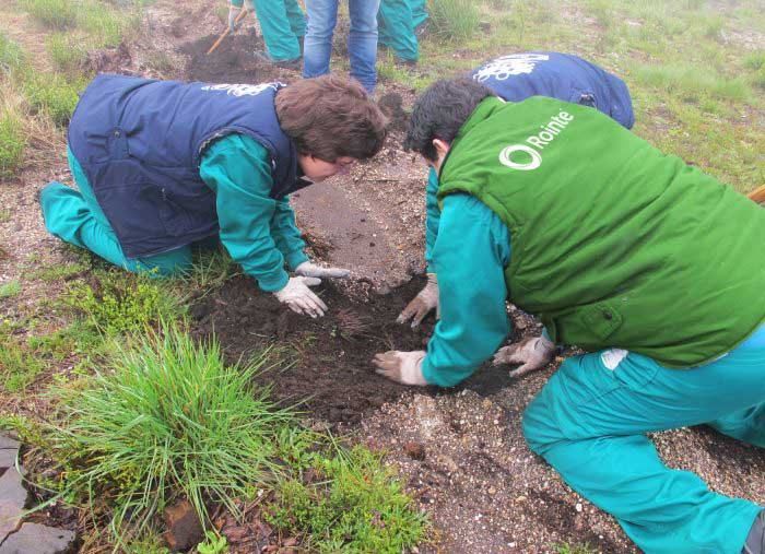 Rointe employees planting trees for our reforestation campaign